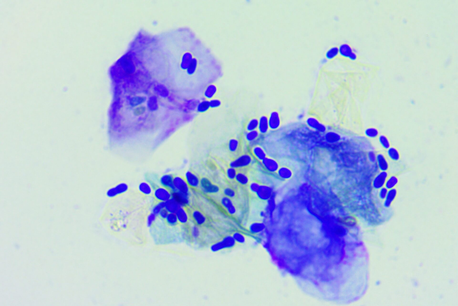 ear cytology